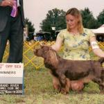Tootsie is the First Sussex in the Histrory of the Breed to Achieve an Agility Title!