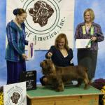 Carver winning an Award of Merit at the National. Carver is a Multi Group placing dog.
